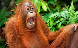 Laugh like a monkey ;)